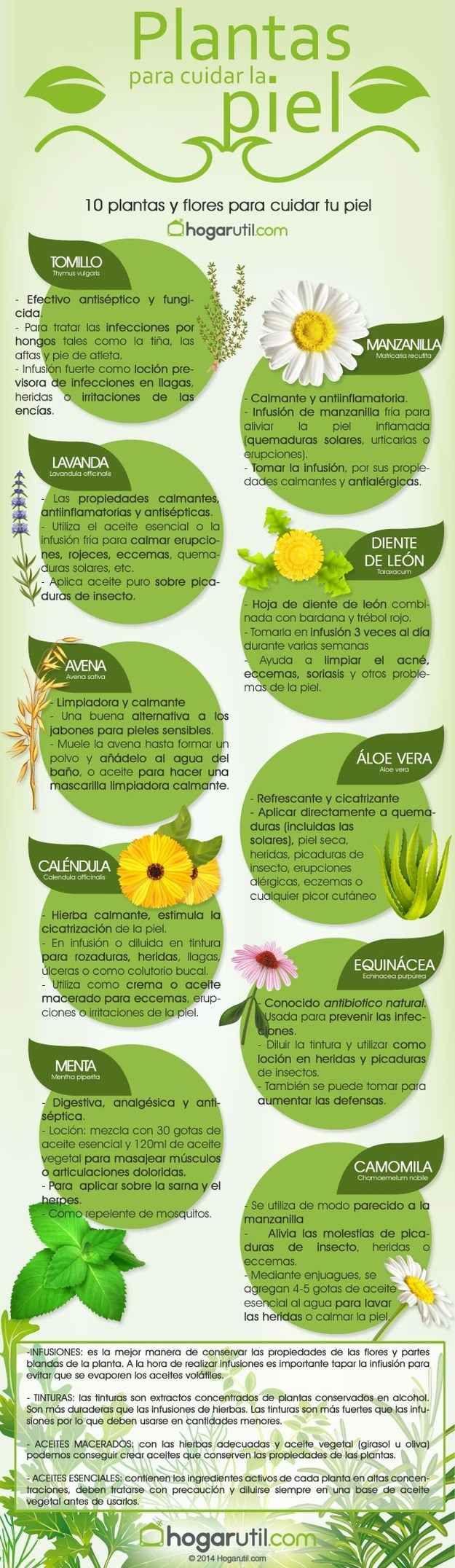 ¿Sabías que la equinácea es conocida como antibiótico natural?