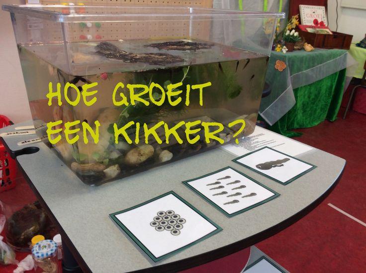 Onderzoekend leren met kikkers! @digitaalspeciaal.nl