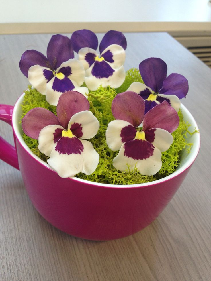 Pansies in a cup