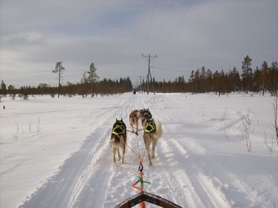 Many dogs have an innate drive to pull. Dogs such as huskies and malamutes were bred for the task. If you have a working breed of dog, it can be very rewarding to tap into that innate desire and participate in a pulling activity, such as sledding, skijoring or weight pulling. The training for all of these activities are basically the same, and the biggest challenge will be overcoming how well you trained your dog not to pull when on a leash.