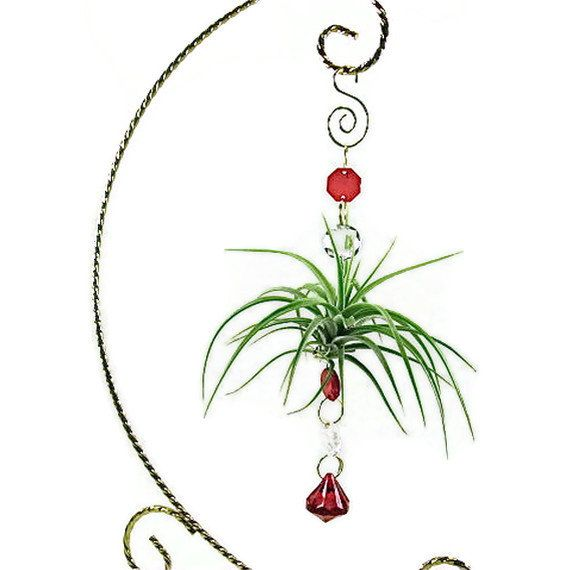 I have an air plant but not one like this! I think I want to make one like this!
