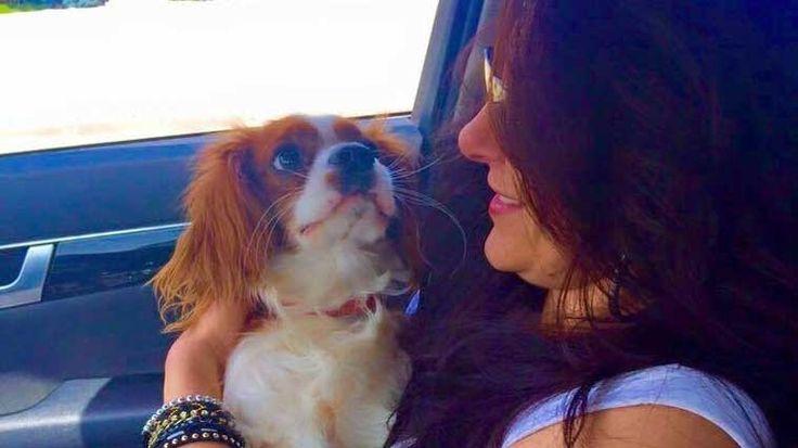 Chester isimli köpek dostunu hayvan oteline bırakan Müge Emeç, tatil dönüşü köpeğin yürüyememesi üzerine veterinere koştu. Chester'da darbeye dayalı parçalı kemik kırığı olduğunu öğrenen Emeç, otel sorumlusuna dava açtı.. Detaylar ajanimo.com'da.. #ajanimo #ajanbrian #dog #animal #hayvan #hayvanhakları