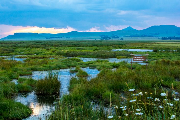 The Wakkerstroom wetland at sunset.