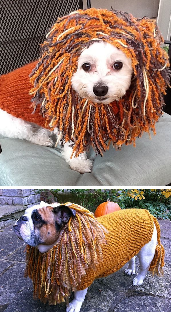 Free Knitting Pattern For King Of The Beasts Lion Dog Sweater Dog