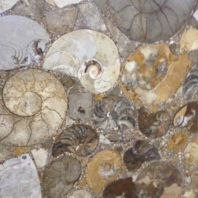 Ammonite Fossils For Walls Or #countertops #interiordesign #gemstone