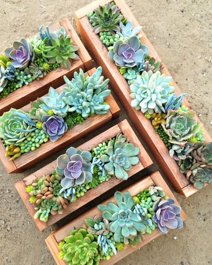 Check out these awesome centerpieces by Santa Barbara Succulent Art!