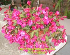 25 Best Ideas About Easter Cactus On Pinterest