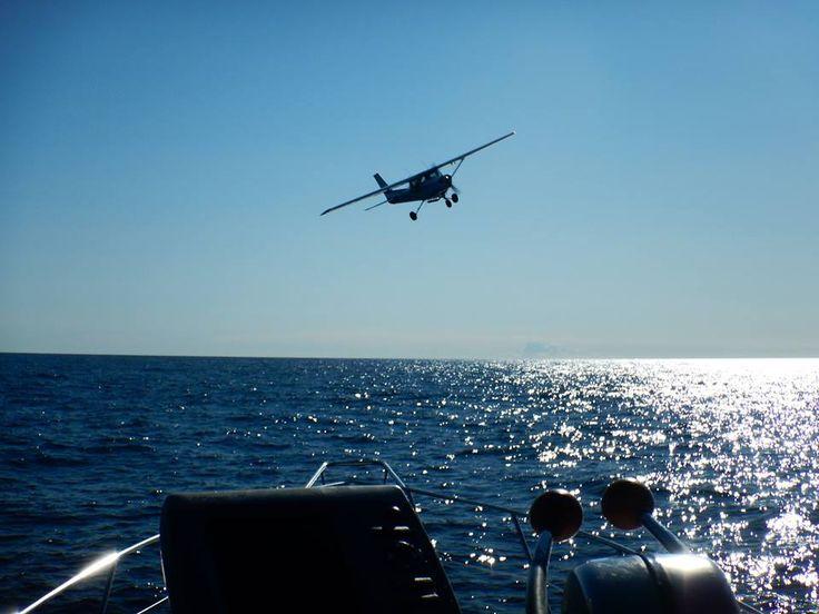 Un avion de repérage pour nous garantir de trouver des dauphins lors de nos sorties