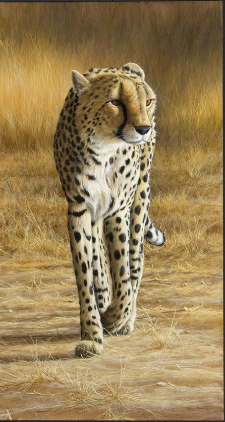 Painting by UK wildlife artist Jeremy Paul.