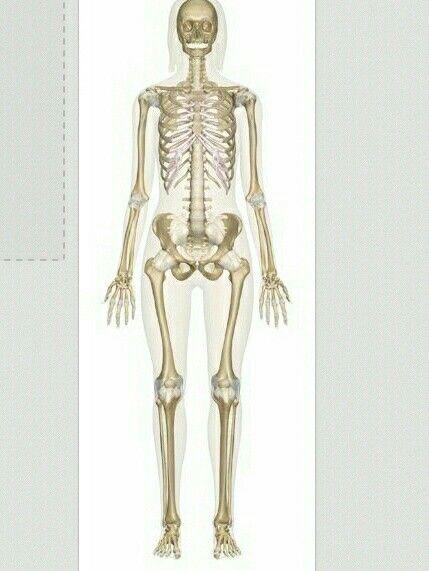 7 mejores imágenes de Skeletal system en Pinterest | Anatomía humana ...