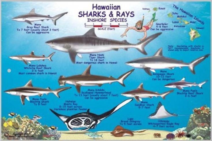 Картинки по запросу types of sharks