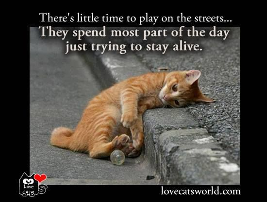 Cats Can Survive How Many Stories