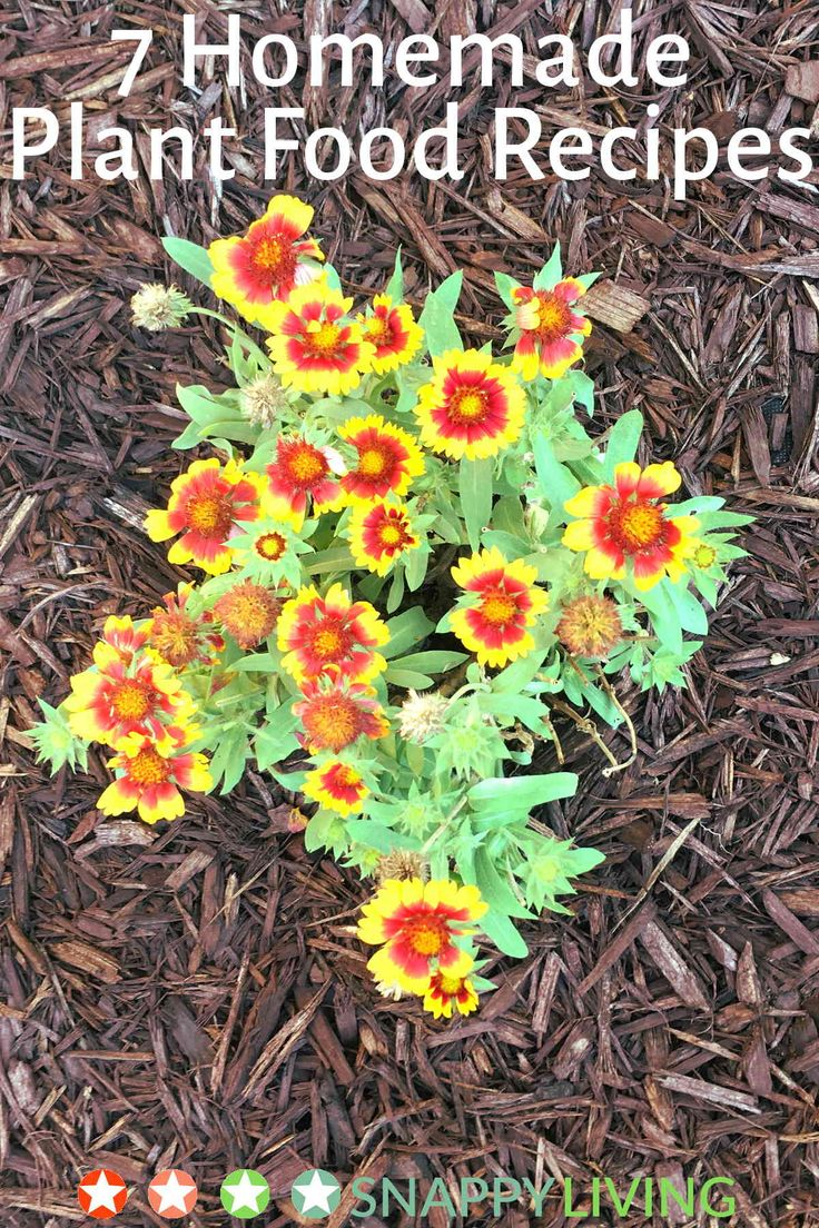 160 Best Gardening Images On Pinterest Gardening Garden 640 x 480