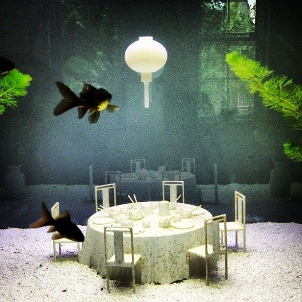 25 best aquarium ideas on pinterest aquarium fish tank for Aquarium decoration idea