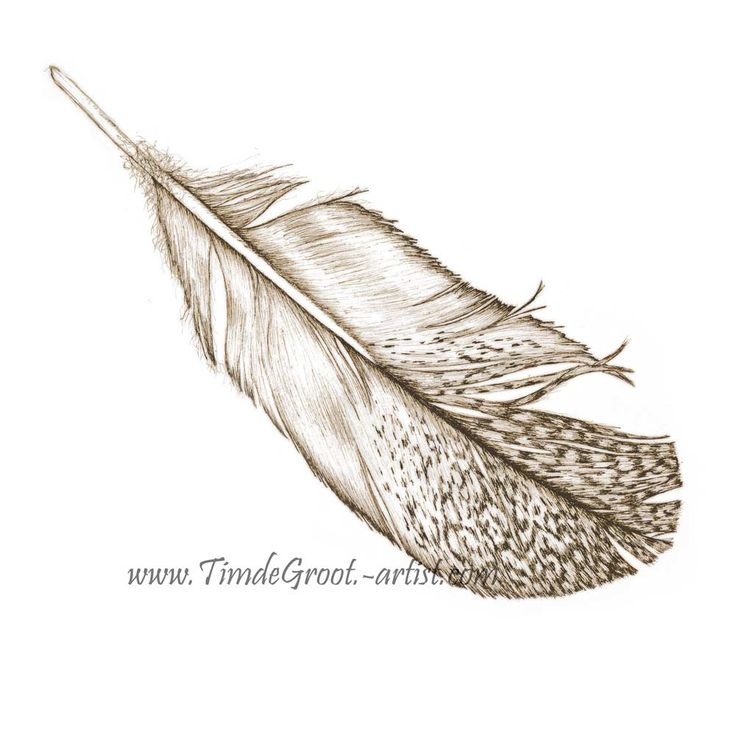 Free Falling 3. Between release and destination is the gentle drift towards groundedness. The transient free fall is a time where past sins can be forgiven and destiny is shrouded in dream. It is the celebration of freedom. Feathers have a links to the spirit world and Free Falling is about putting your faith in destiny. #feather #ink #art #print #wallart #destiny #botanicals
