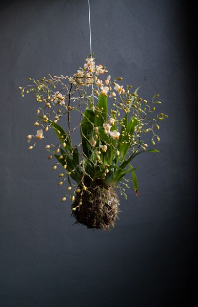 Kokedama moss garden. They seem to be easy to make http://www.ehow.com/how_8231522_make-kokedama-moss-ball.html