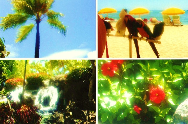 pictures I took from when I wend to Hawaii