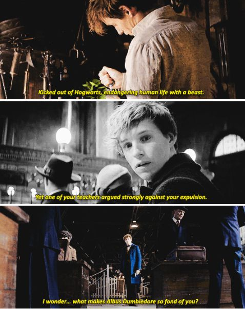 From The Fantastic Beasts and Where To Find Them NEW trailer - You're an interesting man, Mr. Scamander. Just like your suitcase, I think there's much more to you than meets the eye.