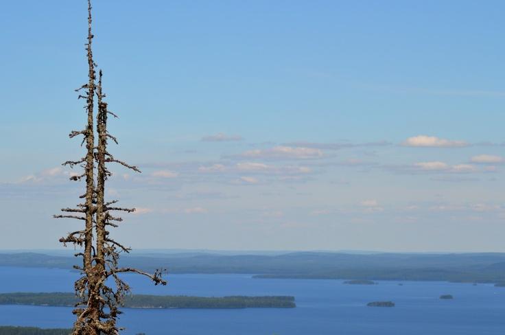 Koli, National park, Finland