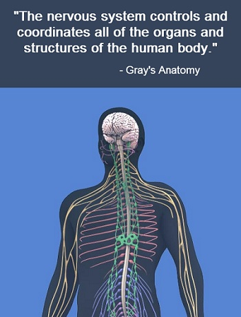55 best Chiropractor images on Pinterest   Chiropractic, Quote and A ...