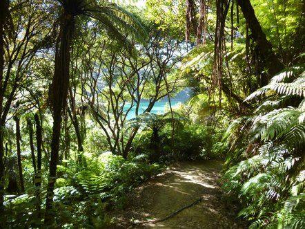Suedinsel - Queen Charlotte Track - Neuseeland