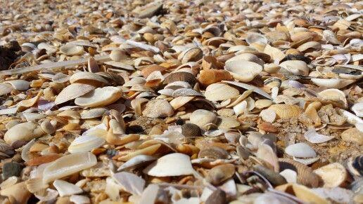 Coquillages sur la plage près d'Altura