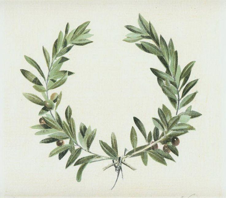 Znalezione obrazy dla zapytania olive branch tattoo