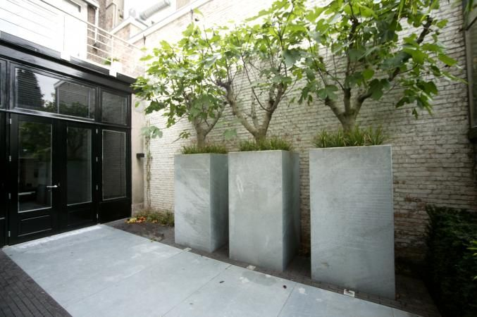 OMMUURDE DAKTUIN | PUURGROEN - these look like fig trees in these square containers