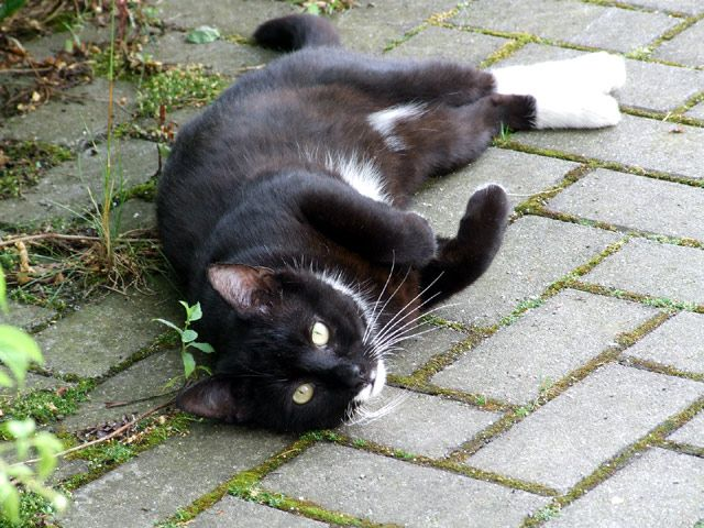 Schwarze Katze liegt am Boden