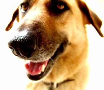 Guests At The Door: Managing Your Dog's Greeting Behavior