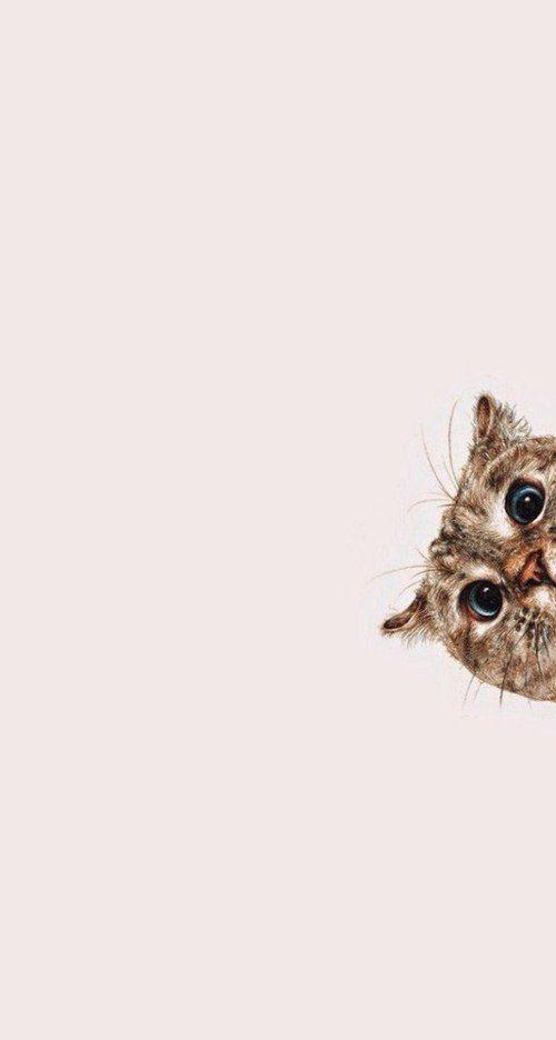 """iammfaj: """" Kitty on We Heart It. """""""