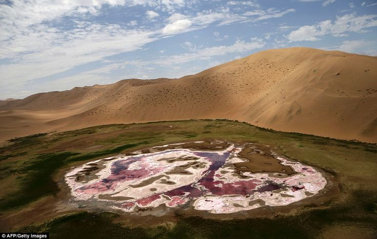 An aerial view of an oasis in Inner Mongolia's Gobi Desert near the SIlk Way Rally route