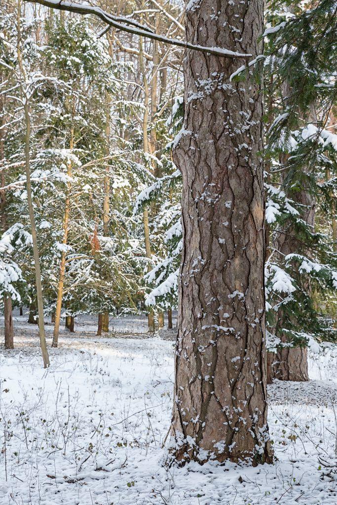 Tree in Laxenburg Park – Landscape Wallpaper by Hattifnattar #travel #holiday #booking #wanderlust #earth #destinations #traveldestinations Landscape