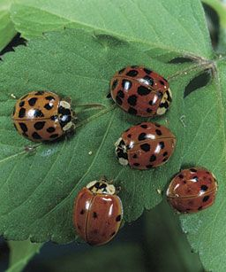 Garden: Attracting Beneficial Insects
