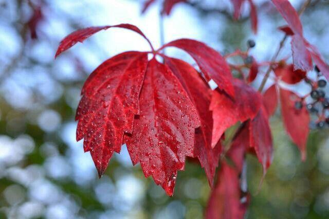 Sì sta come d'autunno sugli alberi le foglie (G.Ungaretti)