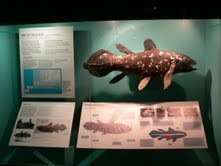 Marine Exhibit - Iziko SA museum