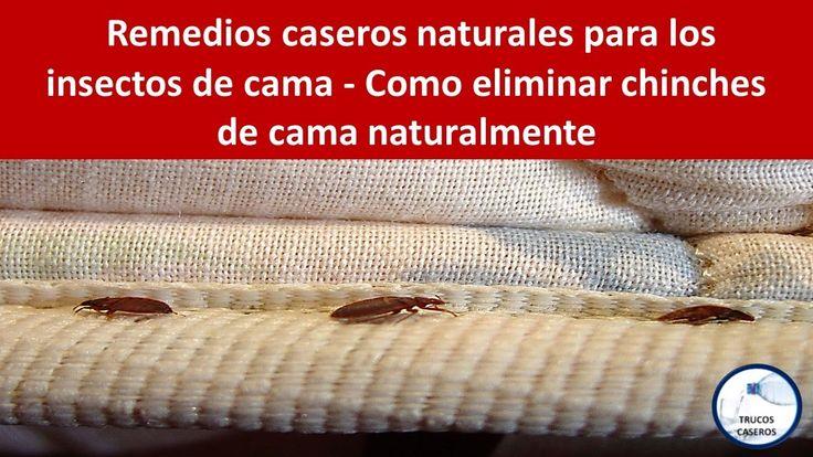 Remedios caseros naturales para los insectos de cama - Como eliminar chi...
