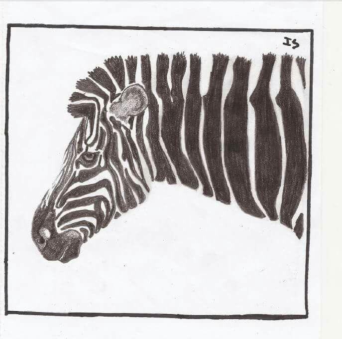 #art #blackandwhite #zebra #draw