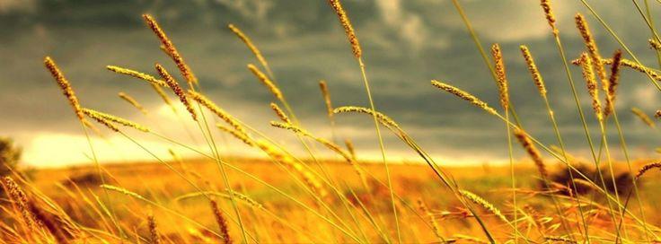 Imagem para facebook Outono campo de trigo – capa de facebook para linha do…