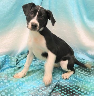 Evee is available for adoption on AllPaws.com. View and share Evee's profile and help her find a home!