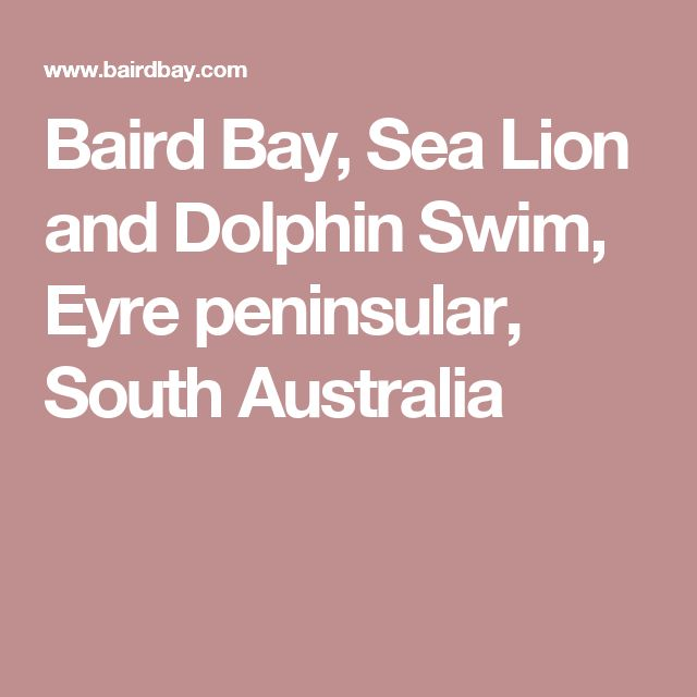 Baird Bay, Sea Lion and Dolphin Swim, Eyre peninsular, South Australia