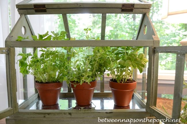 A Tabletop Greenhouse For Growing Herbs Recycling We