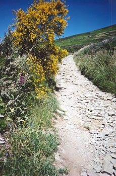 Camino de Santiago de Compostela or a.k.a The Way of St James - It takes 4-7 weeks to complete it and you walk through these roads in Northern Spain.