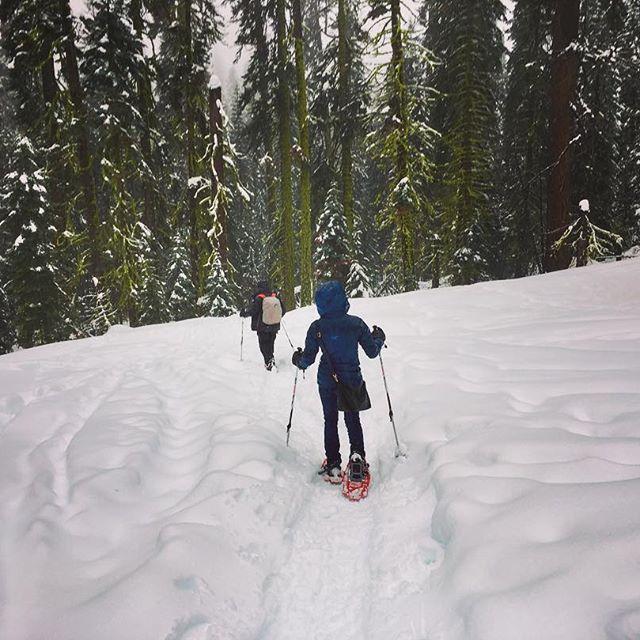 【mi_n_mi】さんのInstagramをピンしています。 《Snow shoes!⛄️ #yosemitenationalpark * せっかく冬のヨセミテに来たんだし、って事でスノーシューズ初体験!🌲(日本語ではなんて言うんだろか?現代版わらじwみたいな、雪の上を歩ける靴です)ずんずん雪の中を進んで行ける感じとっても楽しかったです⛄️👣 #ヨセミテ国立公園 * #yosemite #nationalpark #snowshoes #snow #intheforest #trip #california #ヨセミテ #スノーシューズ #雪 #山 #森 #森の中 #旅行 #カリフォルニア #アメリカ生活 #海外在住 #海外生活 #国際結婚 #カスタマイズエブリデイ》