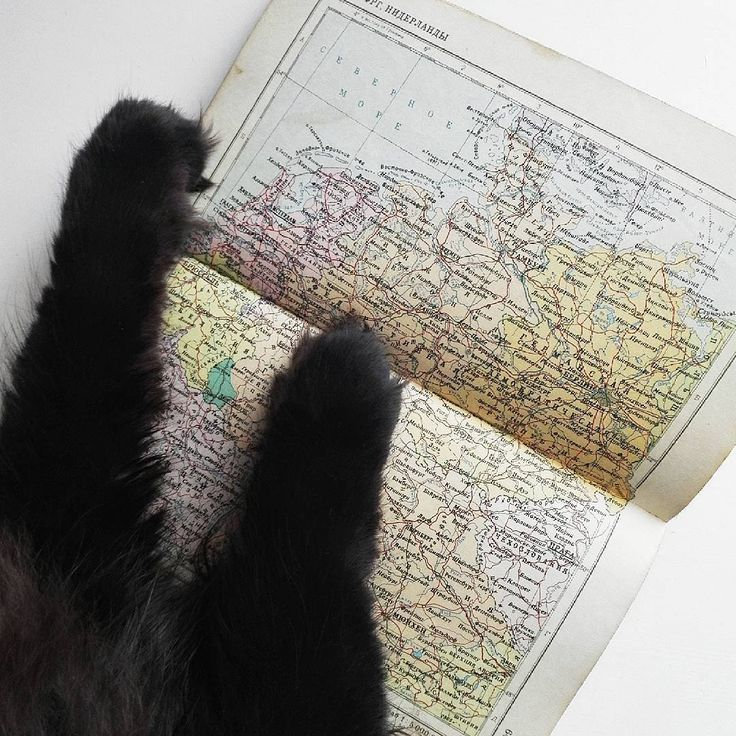 cat map travel minimal blackcat