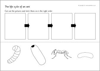 19 best images about ants on pinterest activities children church and common core standards. Black Bedroom Furniture Sets. Home Design Ideas