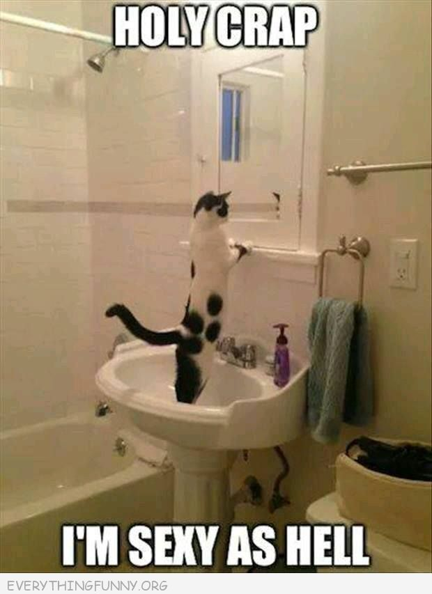 Funny Cat Picture Looking In Mirror Im Sexy As Hell