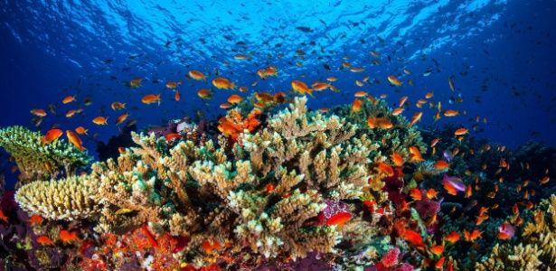 Peixes nadam na Grande Barreira de Corais, na Austrália. Das 8.688 espécies ameaçadas ou quase ameaçadas, 19% (1.688) são afetadas pelas mudanças climáticas, tanto pelas temperaturas como pelos fenômenos extremos. A Grande Barreira de Coral, na Austrália, registrou seu pior episódio de branqueamento pelo segundo ano consecutivo. Os corais afetados por 2 anos seguidos não poderão se recuperar, segundo cientistas do país.  Fotografia: Universidade James Cook / EPA / Efe.
