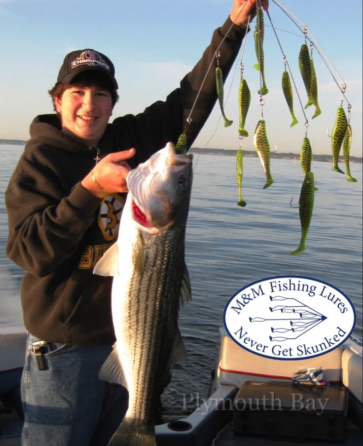 "Striped bass hooked on 32"" Tiger Stripe Umbrella Rig $45.00"