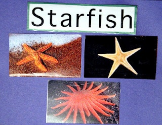 preschool starfish activities, resources and printables for an ocean theme